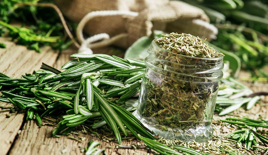 Tis the Season … for Rosemary